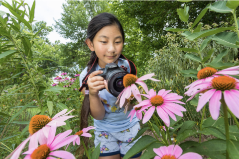 Girl photographing purple cone flower