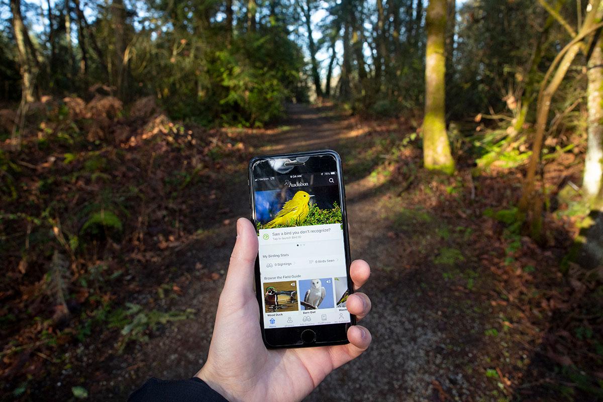 Yellow Warbler identified using Audubon Bird Guide App.